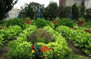 Chicagopotager