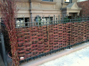 Traditional waddle fences separated potager gardens from each other and into zones. Here is a modern waddle fence in New York City.